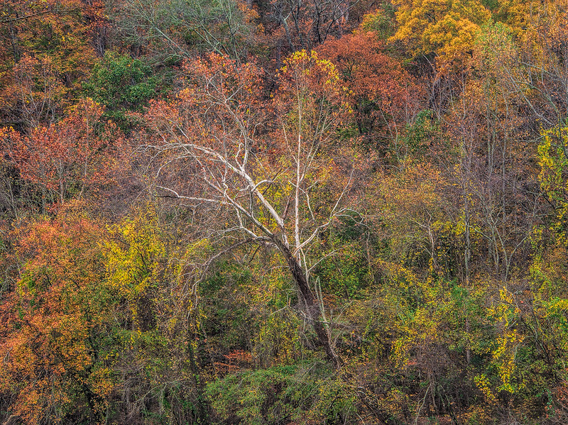 Painted Trees Along Chattahoochee River