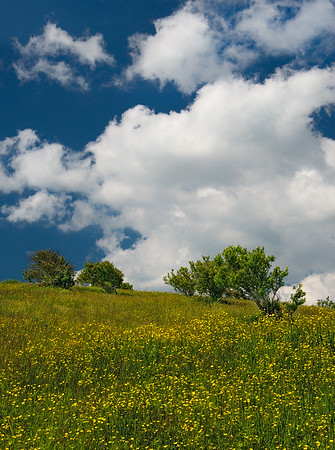 Buttercups And Clouds