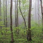 Spring Rain In The Blue Ridge Mountains