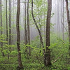 Spring Rain - Blue Ridge Mountains