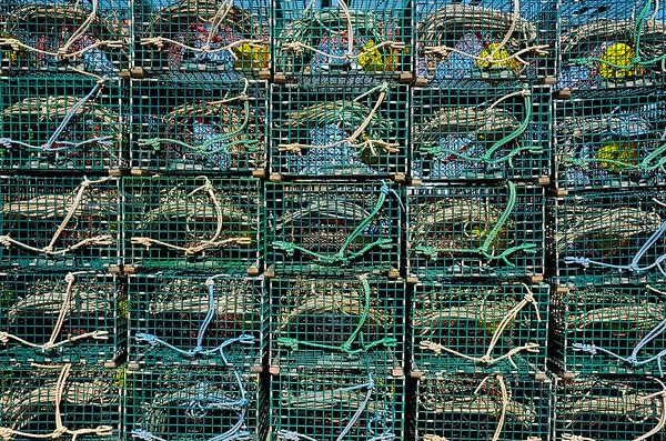 Twenty Five Lobster Traps