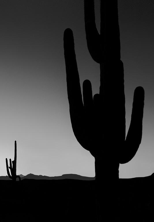 Saguaro Silhouette