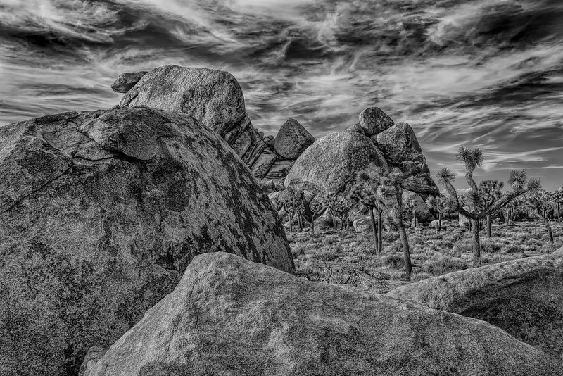 Rock Formation Study With Joshua Trees