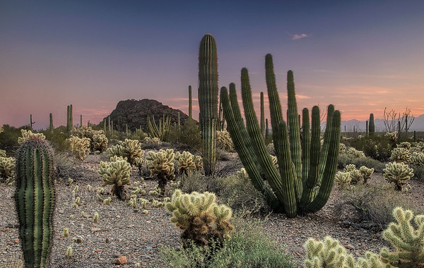 Blue Hour In Organ Pipe NM