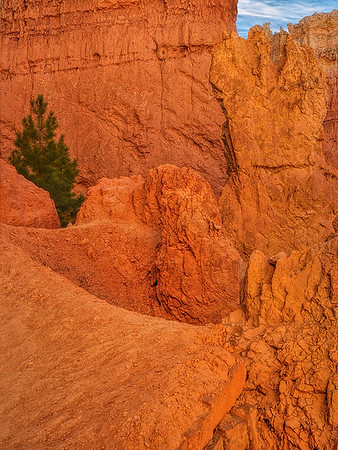 Lone Pine Tree In Bryce Canyon