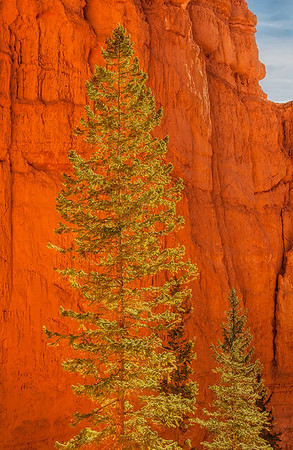 Evergreen Family In Bryce Canyon