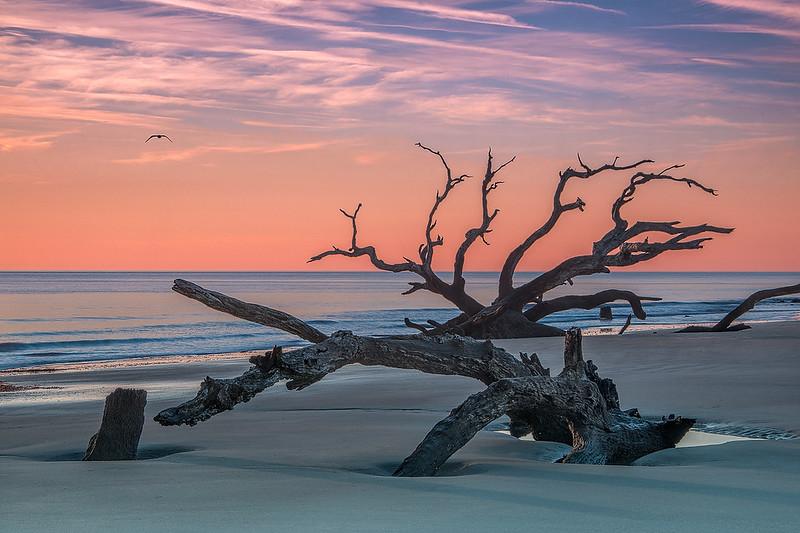 Dawn At Driftwood Beach