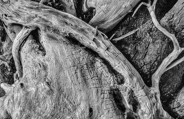 Driftwood Abstract - Botany Bay Beach