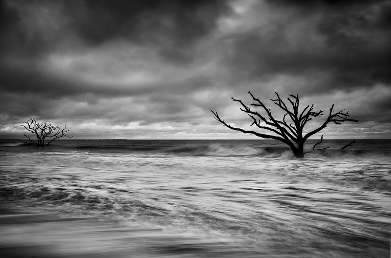 Two Driftwood Trees at High Tide