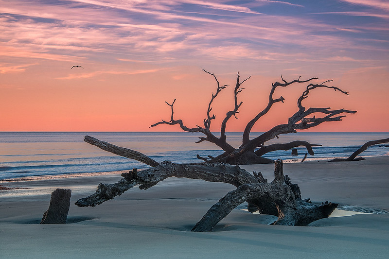 Dawn At Driftwood Beach
