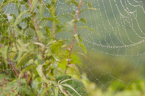 Spider Web After Rain