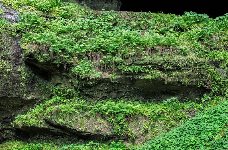 Ferns Growing On Cliff Face