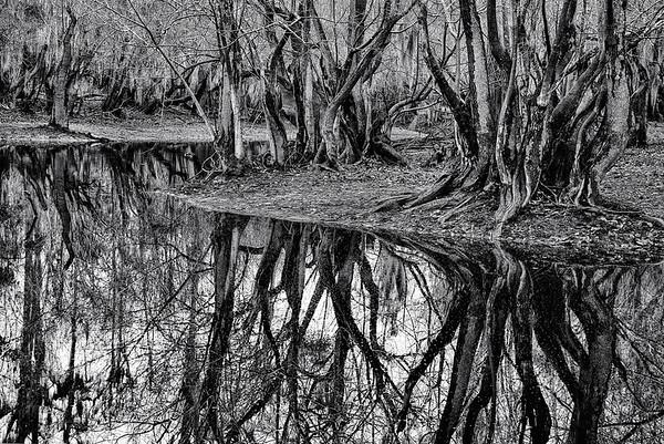 Suwanee River Reflections