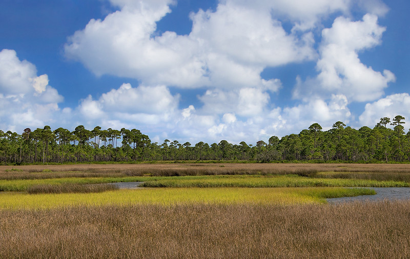 Tidal Marsh At Bald Point (Color)