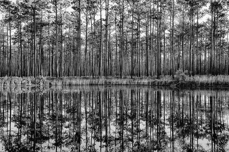 Swamp Reflections #3