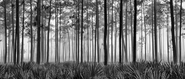 Swamp Light - Okefenokee Swamp