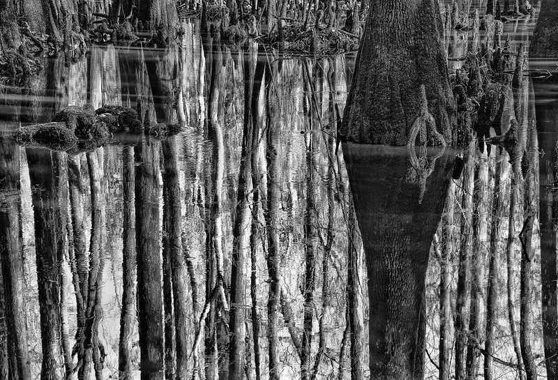 Swamp Slough Reflections - Congaree Swamp NP