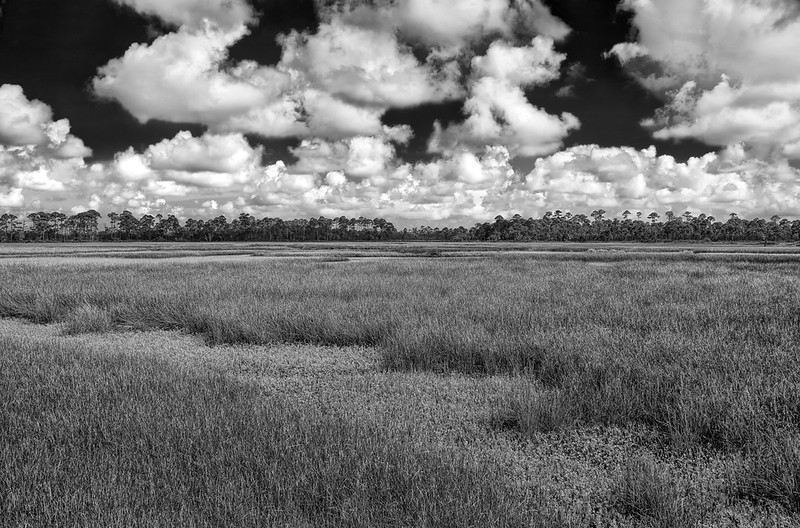 Tidal Marsh - Bald Point State Park