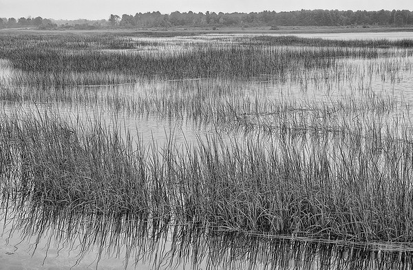 Scarborough Marsh