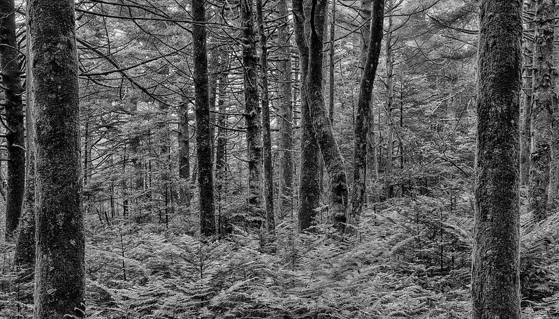 Fern Forest In Roan Highlands