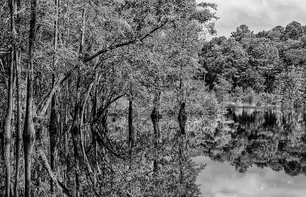 Tree Reflections In Dead Lakes