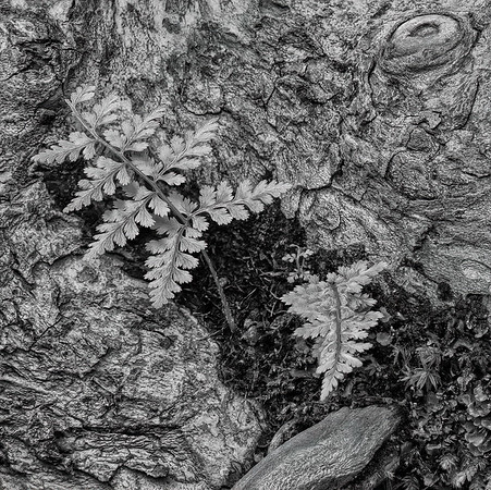 Tree Bark and Fern
