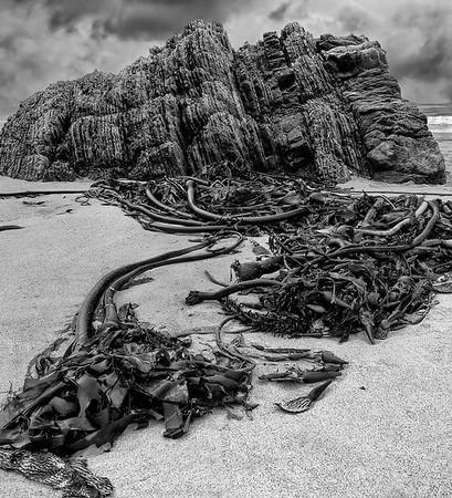 Beach Still Life With Kelp