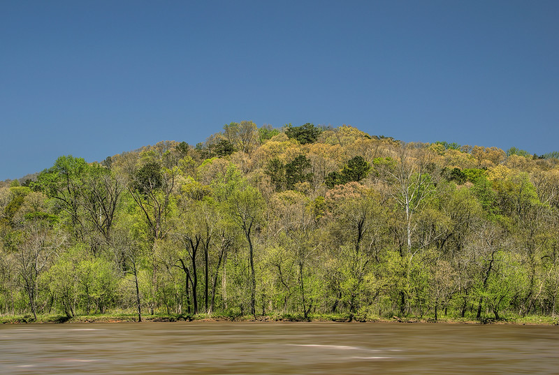 Chattahoochee Riverbank, Early Spring
