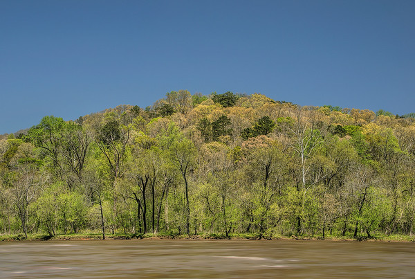 Chattahoochee Riverbank In Early Spring