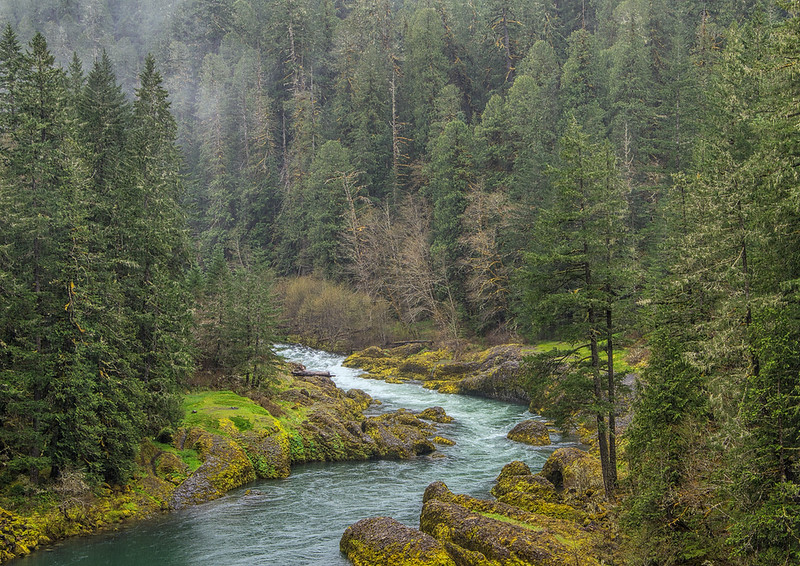 Clackamas River In Mt Hood National Forest