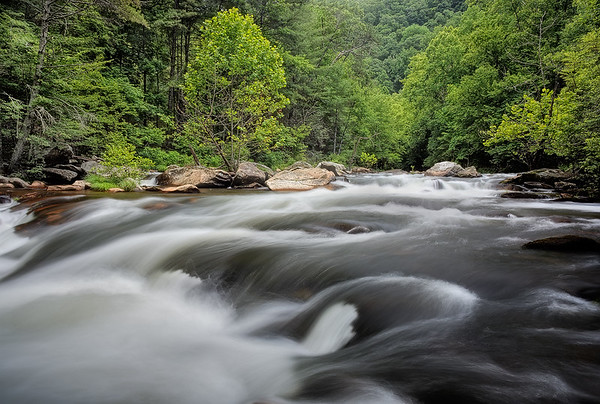Tellico River Rapids