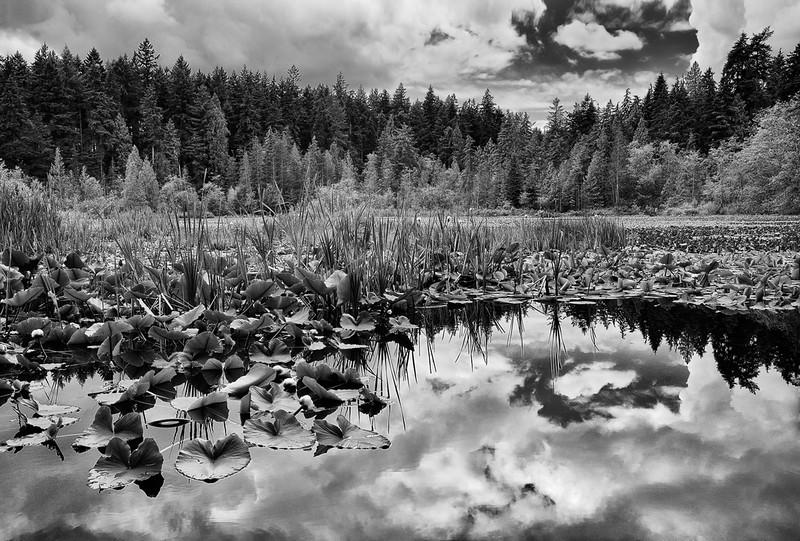 Beaver Lake - Vancouver