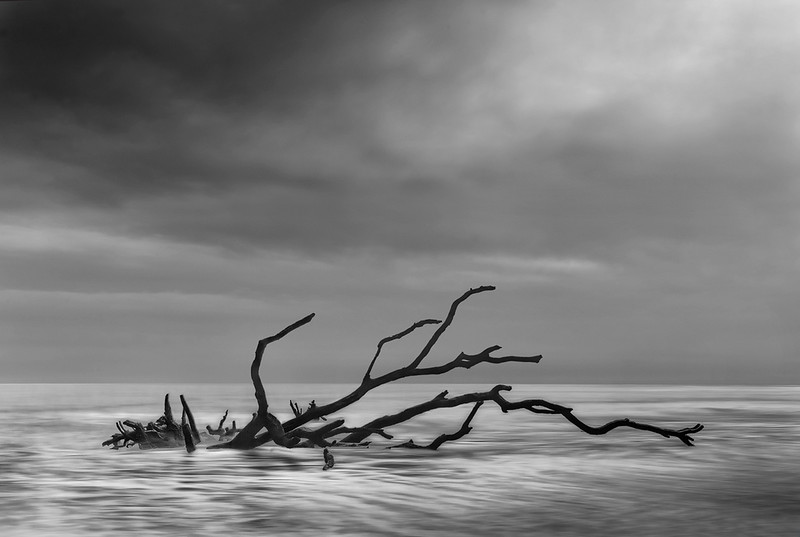 Silhouetted Driftwood At High Tide