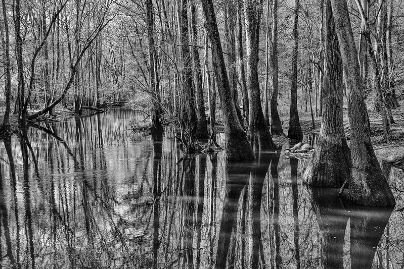 Cedar Creek - Congaree Swamp NP