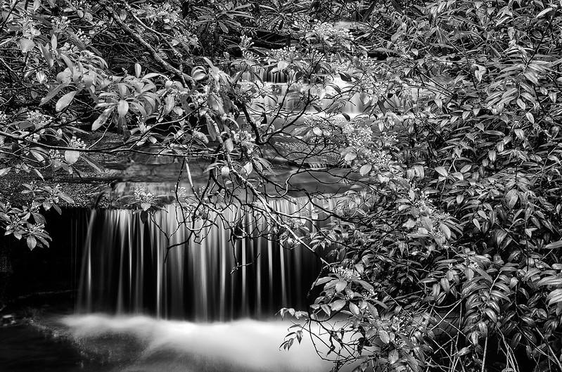 Carrick Creek - South Carolina