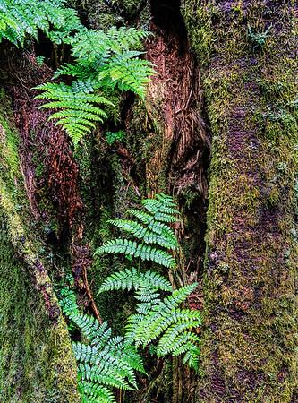 Fern Tree (Vertical Study)