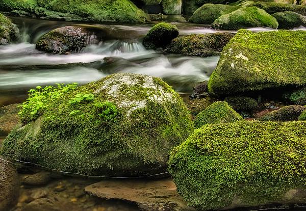 Mossy Boulders In Little Santeelah Creek