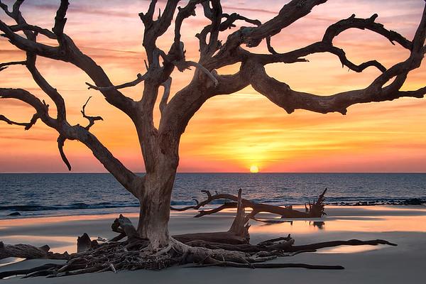Sun Rising Behind Driftwood Tree