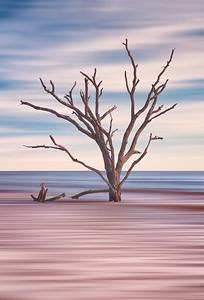 Solitary Driftwood Tree In Botany Bay