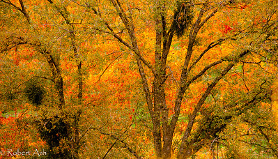 """Fall Colors Extravaganza""  ©  Robert Ash"