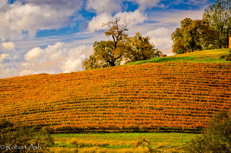 """Guarding the Vineyards"" <br /> <br /> ©  Robert Ash"