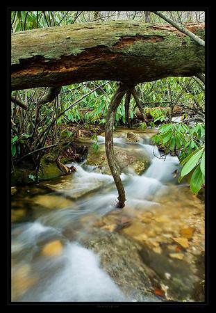 Woodstream_26-em