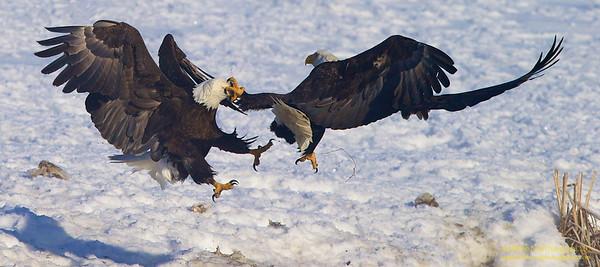 Fierce Rivalry