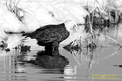 Mirror, Mirror on the Wall....BW