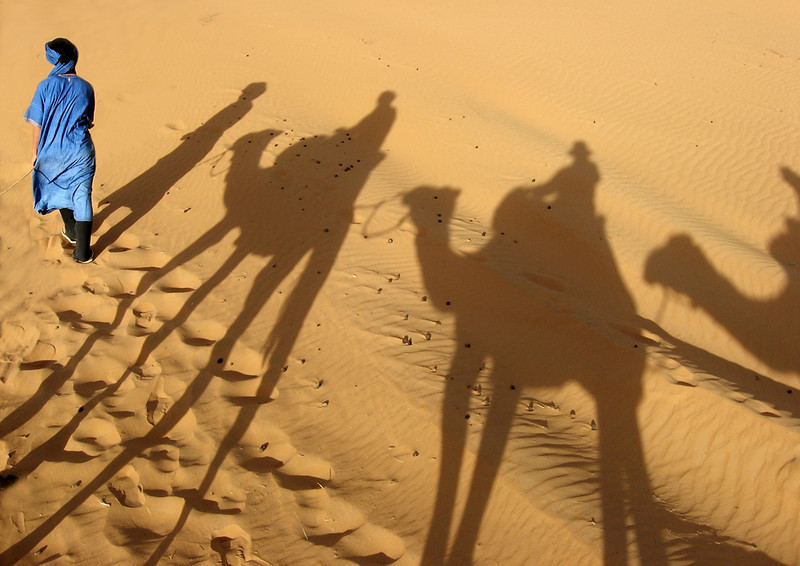 Camel train, Erg Chebbi Dunes<br /> <br /> Crossing the dunes by camel in the late afternoon to the Bedouin-style camp for the night provides a wonderful opportunity to observe the half-light creating fascinating interplays between the shadows and the golden sands.