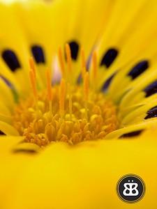 Treasure Flower