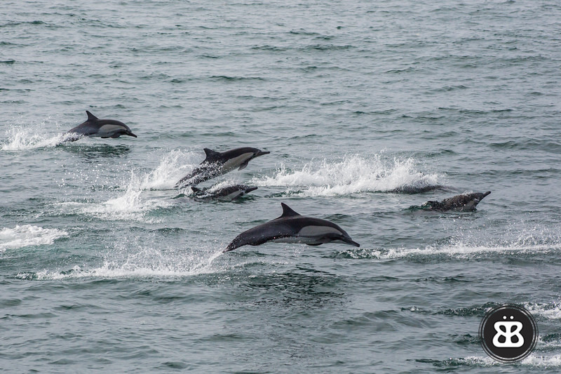 Dolphin Stampede 6