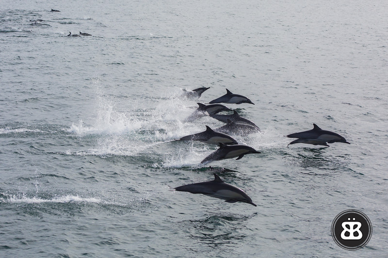Dolphin Stampede 1