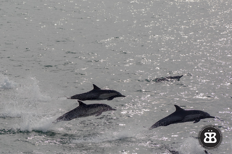 Dolphin Stampede 4