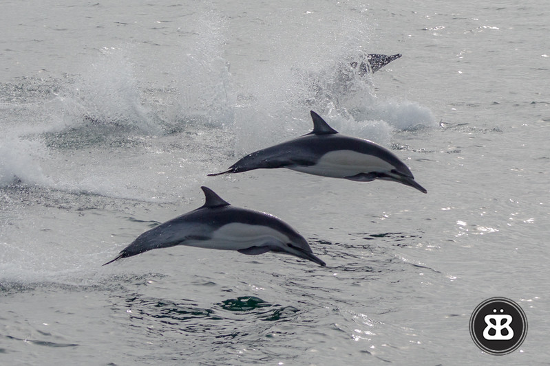 Dolphin Stampede 8